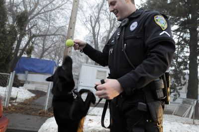 Officer Mike Ziegler plays with narcotics dog, Austin, in Airway Heights on Monday.  (Jesse Tinsley / The Spokesman-Review)