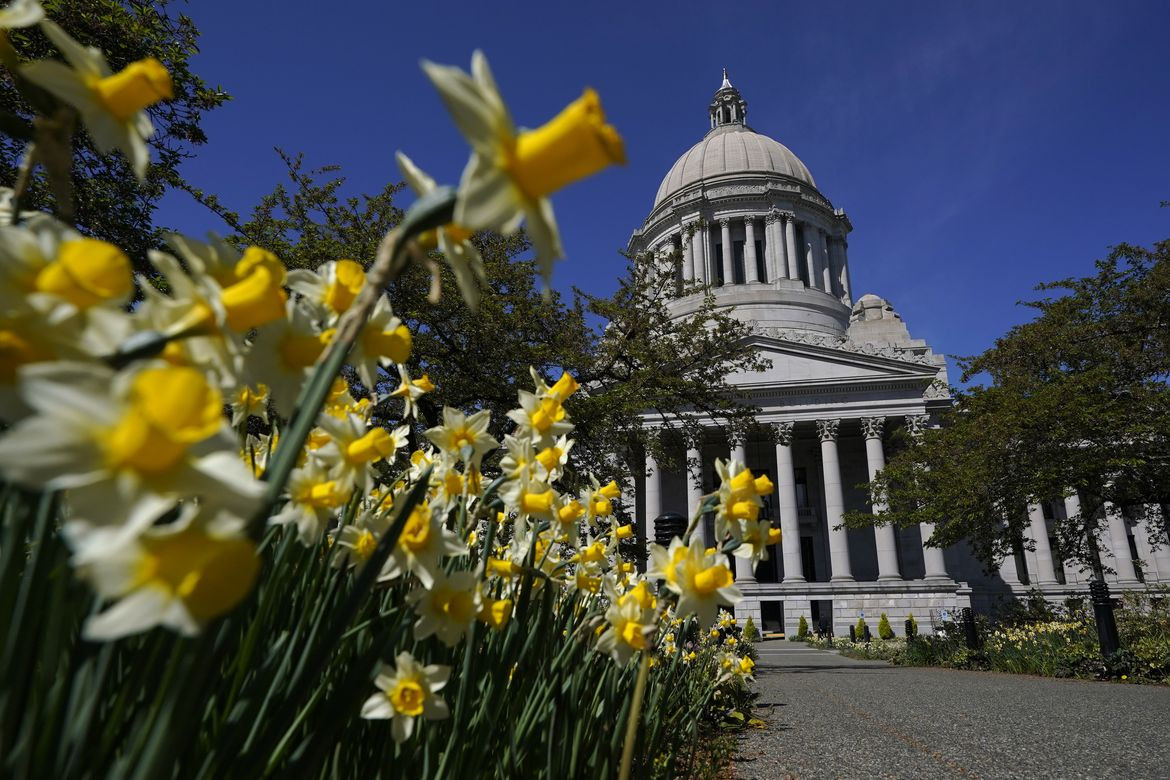 The light gray dome and pillars of the Washington state capitol against a blue sky, with daffodils in the foreground lining the walkway toward the building.