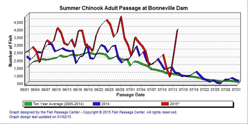 Summer chinook fish counts at Bonneville Dam. (Fish Passage Center)