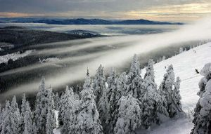 A skier makes his way down a run at Mount Spokane earlier this month, finding the perfect cure for the cold-weather blahs.   (Jed Conklin / The Spokesman-Review)