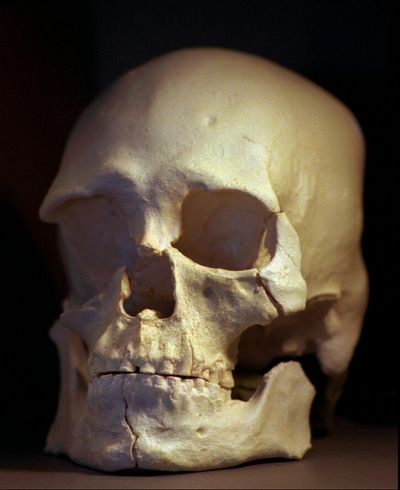 This July 24,1997, file photo of a plastic casting of the skull from the bones known as Kennewick Man, is shown in in Richland. A (ELAINE THOMPSON / Associated Press)