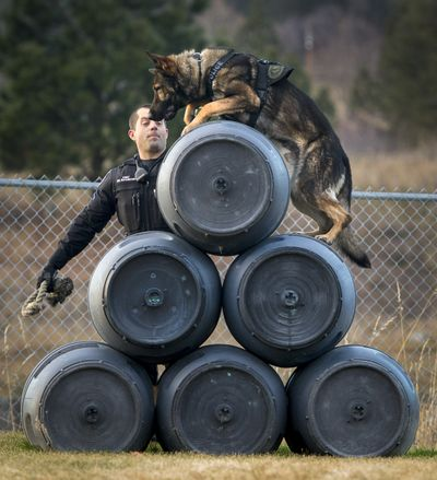 Spokane police Officer Paul Buchmann runs new police K-9 Talon through the paces on an obstacle course at the Spokane Police Academy. After 10 weeks of training, Buchmann and Talon, and Spokane sheriff's Deputy handler Tyler Kullman with K-9 Deacon, graduated as certified K-9 patrol officers Wednesday. (Colin Mulvany)
