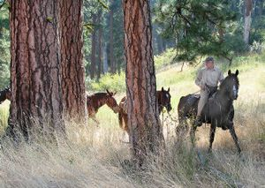 Scott Stouder, the regional field director for Trout Unlimited, packs his horses and mules through old-growth ponderosa pines as he heads into the Rapid River roadless area drainage near Idaho's Seven Devils Wilderness.   (Rich Landers / The Spokesman-Review)