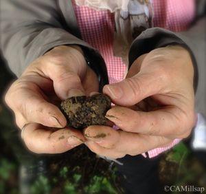 Black truffle from Croatia. (Cheryl-Anne Millsap / Photo by Cheryl-Anne Millsap)