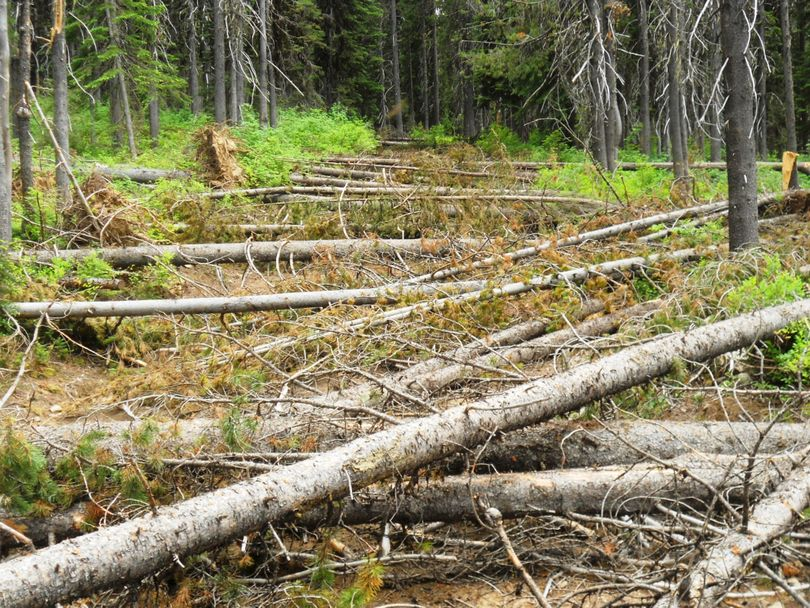 The 500 Road on the Clearwater National Forest is blocked by trees between Castle Butte and Liz Butte in the first week of August 2011. (U.S. Forest Service)