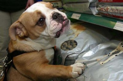 Keeping your pet happy while giving medication can be a chore. New products make the task easier.   (File / AssocIated Press / The Spokesman-Review)