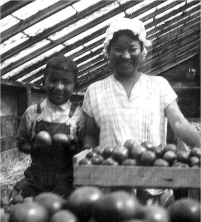 Two members of the Uyeji family proudly display their produce in their greenhouse sometime in the 1930s. The greenhouse was on the site of the National Archives at Seattle building. Photo courtesy of Densho, Uyeji Collection. The National Archives of Seattle