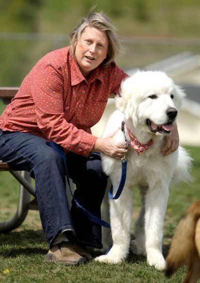 Cooper, a Great Pyrenees, relaxes while visiting the Moscow Dog Park on May 14, 2012, with Lori Ammons, founder of the Cooper's Legacy Foundation. (Geoff Crimmins / Moscow-Pullman Daily News)