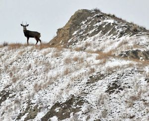 Following a mild winter, deer hunters throughout Idaho can expect to see more small bucks this season. (Associated Press)