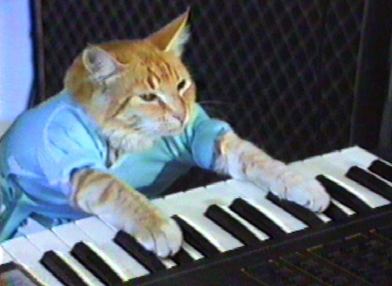 The late-great Fatso the Keyboard Cat is now an Internet sensation thanks to the music video Charlie Schmidt recorded back in the early 1980s in Spokane, Wash.    Courtesy of Charlie Schmidt (Courtesy Schmidt / The Spokesman-Review)