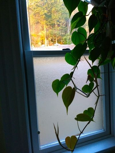 The lower sash of this window is covered with a plastic film, which is cheaper to install than new glass. (Tim Carter)