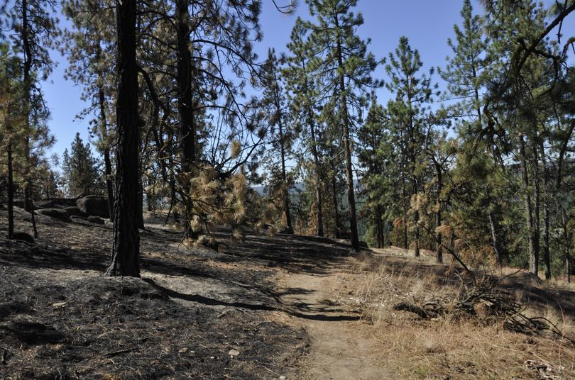 Firefighters working the fire above the Little Spokane River in the second week of July 2015 used hiking trails to their advantage for access and as fire lines when possible. (Rich Landers)