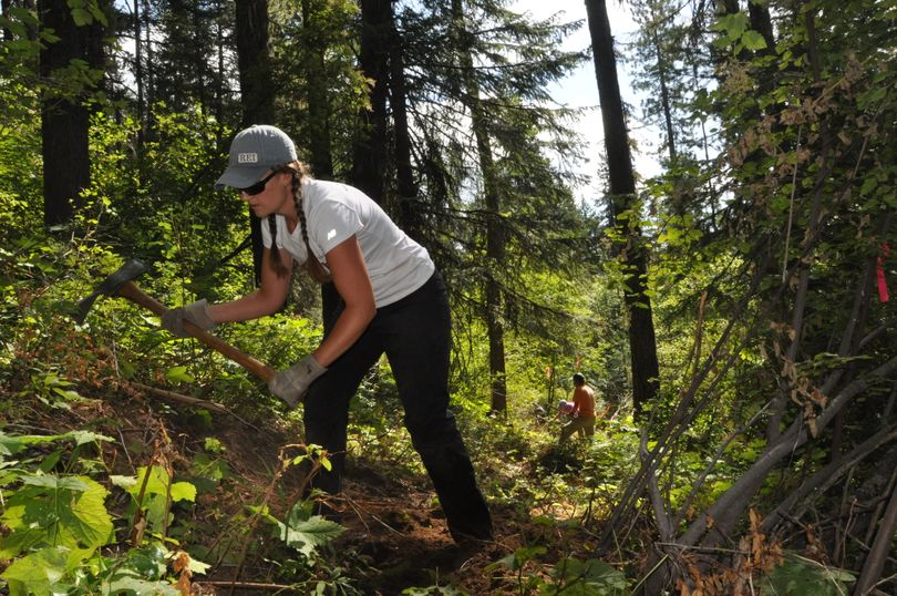 Holly Weiller of the Spokane Mountaineers uses a pulaski to help build the new Trail 140 at Mount Spokane State Park. (Rich Landers)