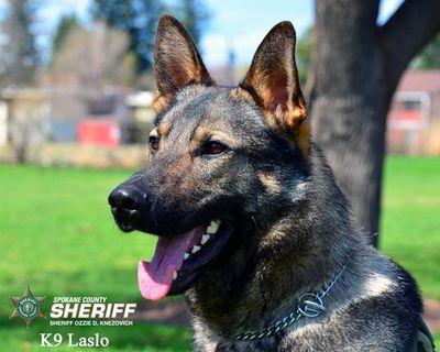 Spokane County police dog Laslo (Spokane County courtesy / Courtesy photo)