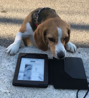 Huckleberry uses a Kindle to catch up on reading during the Handshake Productions concert featuring a Peter, Paul & Mary tribute band at Sherman Square Park Tuesday Night. (DFO photo)