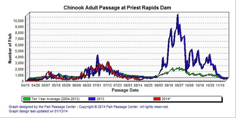 Columbia River chinook salmon counts at Priest Rapids Dam. (Fish Passage Center)