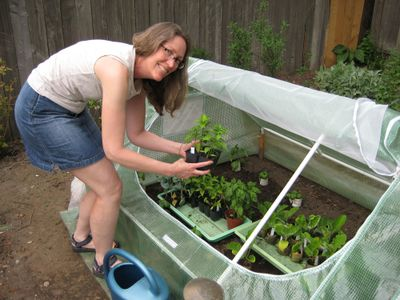 Last spring, Liberty Lake gardener Jane Bitz used her large coldframe to get warm-season crops like tomatoes and eggplant off to a good start. Special to  (SUSAN MULVIHILL Special to / The Spokesman-Review)