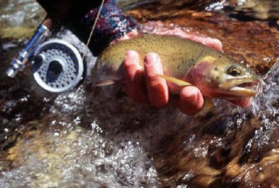 A project to remove hybrid trout from western Montana lakes to increase the cutthroat trout population was proposed in 2001.  (Rich Landers / The Spokesman-Review)