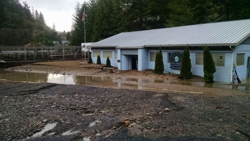 The Fallert Creek Hatchery on the lower Kalama River was ravaged by flooding on Dec. 8, 2015. The much and debris choking the facility resulted in the loss of 2.4 m million salmon fry. (Washington Department of Fish and Wildlife)