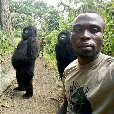 Mathieu Shamavu, a ranger at the Senkwekwe Center for Orphaned Mountain Gorillas, poses for a 2019 photo with Ndakasi, left, and Ndeze in Virunga National Park, Congo.  (Mathieu Shamavu)