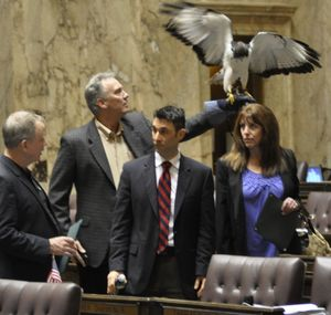 OLYMPIA -- Seahawks mascot Taima visits the House of Representatives Friday with owners David and Robin Knutson, Rep. Kevin Parker (center) and Seahawks executive Mike Flood. (Jim Camden)