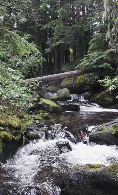 This 2016 photo provided by the Idaho Department of Environmental Quality shows a stream in a protection zone in a timber sale near Priest Lake in northern Idaho. Officials say Idaho's logging rules intended to protect water quality in streams inhabited by fish are effective and that loggers are following the rules. (Hawk Stone / Idaho Department of Environmental Quality)