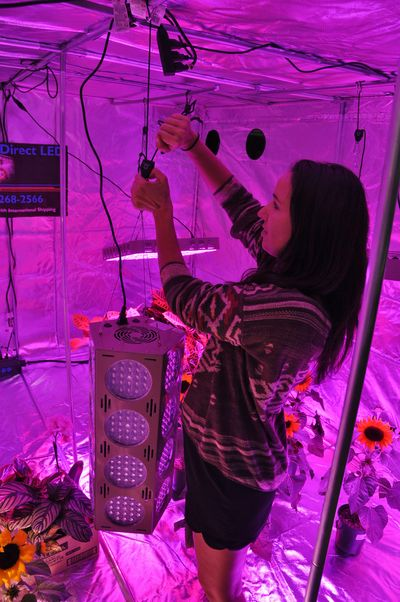 Lori Sullivan of Diamond Direct LED adjusts a low-energy LED fixture that emits a special spectrum plants need. She was setting up for Canna Con on Thursday in the Tacoma Dome. (Jim Camden)