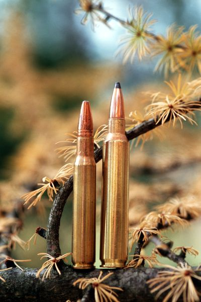 These cartridges with lead bullets are illegal for hunting in certain California areas to protect condors from lead poisoning.  (Rich Landers / The Spokesman-Review)