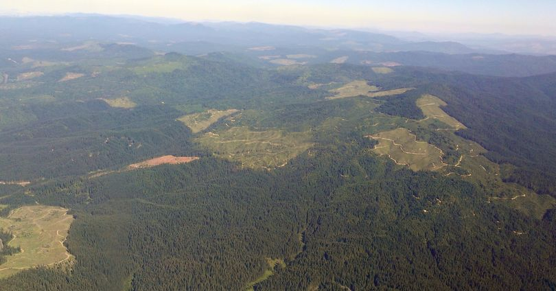 This July 18 aerial photo shows the mixed ownership of forests north of the Clearwater River in Idaho, including Potlatch private forest, Idaho State Endowment Lands and the Clearwater National Forest. (Associated Press)