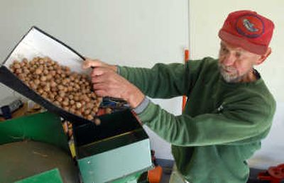Paul Eichin of Green Bluff pours a box of hazelnuts into a shelling machine. Eichin, who planted a small orchard of hazelnuts about 10 years ago, now gathers enough to sell to specialty stores and candy makers.   (Photos by JESSE TINSLEY / The Spokesman-Review)