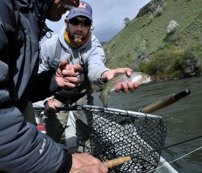 Stefan Woodruff, a fly fishing guide with Ellensburg Angler, releases a rainbow trout for David Moershel, while drifting the Yakima River. (Rich Landers)