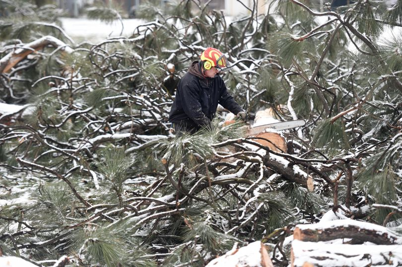 Tree climber Sean Price of Northwest Plant Health Care cuts the larger tree trunks to length so they can be sold as timber in Patrick Byrne Park in North Spokane, Wednesday, Dec. 2. 2015. Byrne Park was one of the hardest hit by the Nov. 17, windstorm. (Jesse Tinsley / The Spokesman-Review)