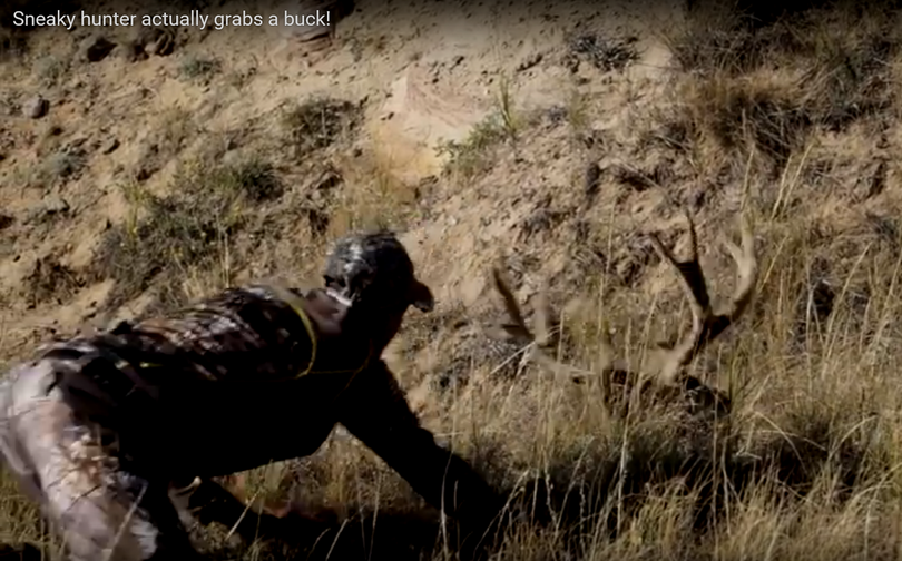 Bowhunter sneaks close to a mule deer buck.