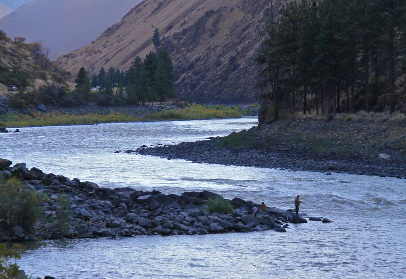A spin-fisherman works the Salmon River downstream from Riggins, Idaho. Fishing for steelhead with spoons and spinners is often ignored by anglers. (Associated Press)