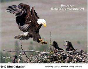 Bald eagles grace the cover of the Spokane Audubon Society's 2012 Birds of Eastern Washington calendar, feature photos by the group's members. Cover photo by Ron Dexter  (Ron Dexter)