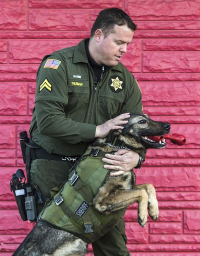Spokane County Sheriff's Cpl. Jeff Thurman and his K-9 Laslo, Feb. 24, 2017, in Spokane Valley, Wash. The dog is retiring after 4 years of service. Dan Pelle/THE SPOKESMAN-REVIEW (Dan Pelle / The Spokesman-Review)