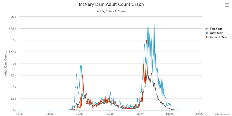 Fall chinook counts over McNary Dam, the last Columbia River dam the migrating fish cross before entering the Hanford Reach. (Fish Passage Center)