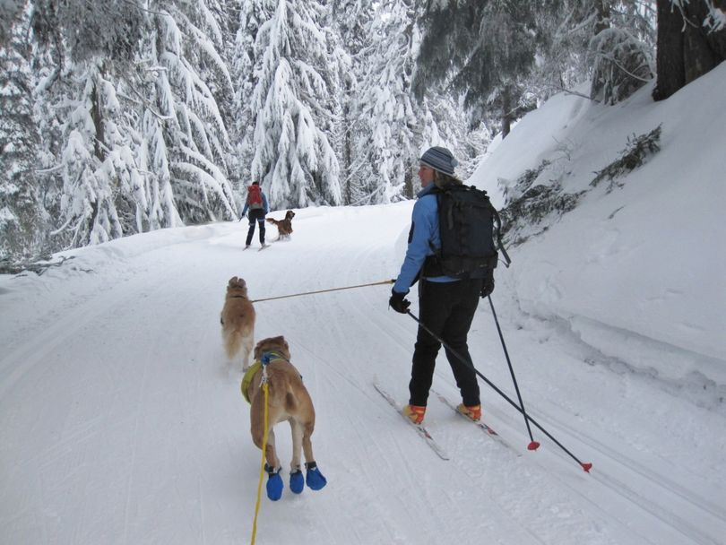 Skijoring with dogs is is allowed on designated groomed nordic skiing trails twice a week at Mount Spokane State Park (Diana Roberts)