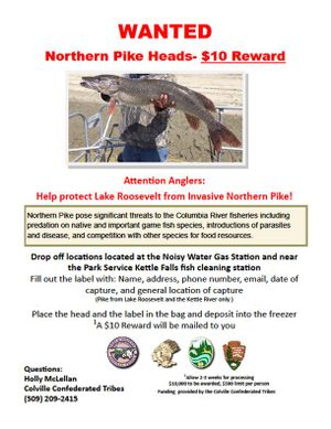 Poster announces $10 reward for northern pike caught in Lake Roosevelt. (Colville Confederated Tribes)