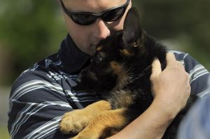 Officer Jay Kernkamp nuzzles his new houseguest, 2-month-old Ajax, on Wednesday at the Spokane Police Academy. Kernkamp is raising Ajax until the puppy is ready for official training as a police dog.  (Jesse Tinsley / The Spokesman-Review)