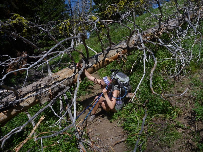 Blowdowns can slow hikers down if they hike the Seven Devils loop before trail crews clear trails in the high mountains of the Hells Canyon Wilderness.