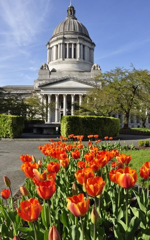 OLYMPIA -- It's tulip season in the Puget Sound, and the Capitol grounds have some flowers up that the deer haven't yet. (Jim Camden/The Spokesman-Review)