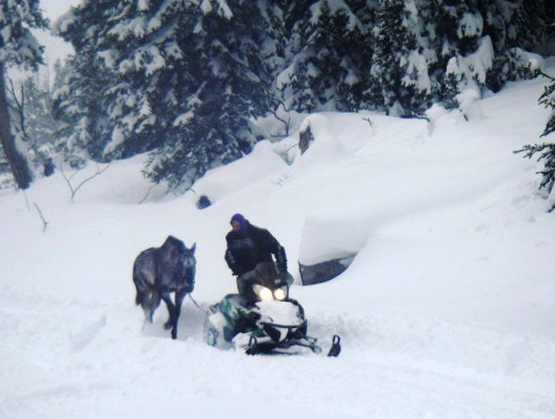 A 6-year-old pack horse named Valentine is led out of the Bridger-Teton National Forest on Dec. 20. by Swift Creek Outfitters owner and operator BJ Hill. Valentine survived in the wintery backcountry alone for six weeks. (U.S. Forest Service)