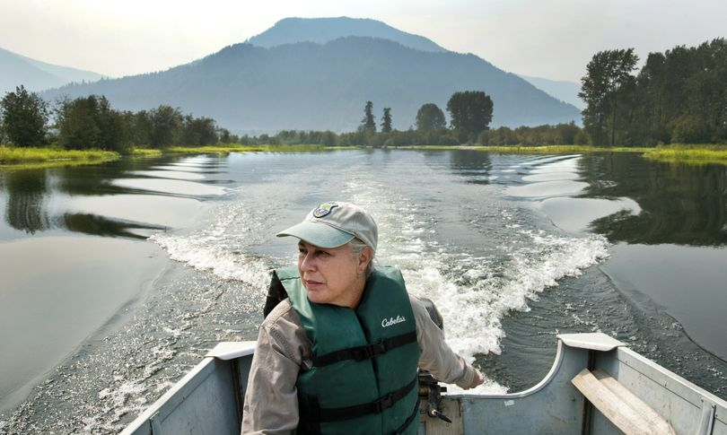 Katherine Cousins, Idaho Department of Fish and Game biologist, boats through the $6 million Clark Fork Delta restoration project on Tuesday near Clark Fork, Idaho. Restoration work started last fall, targeting 680 threatened acres of the delta. The intent is to preserve the delta and prevent fertile shorelines from eroding. Cousins and her team put in 90,000 plants. (Dan Pelle)