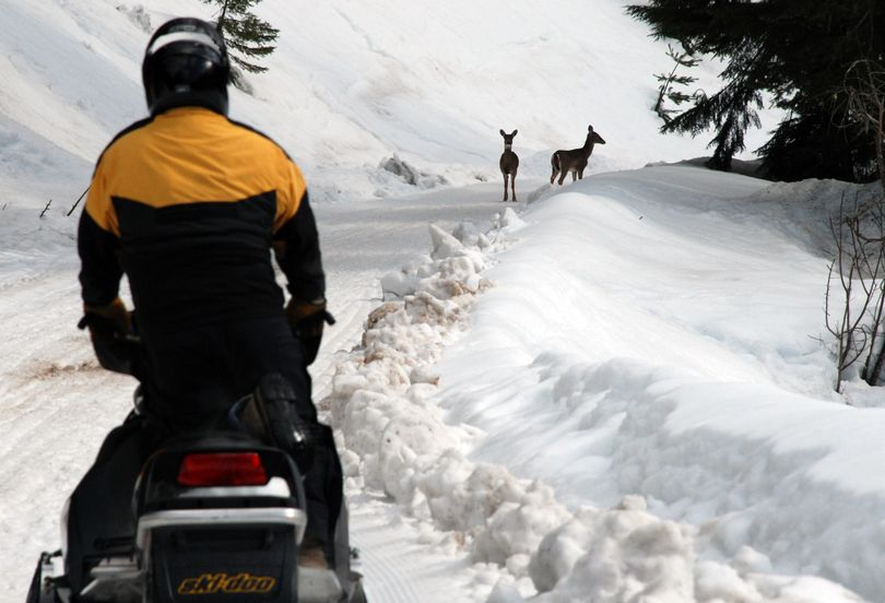 Snowmobilers share groomed trails with recreationists on foot and sometimes wildlife. (FILE)