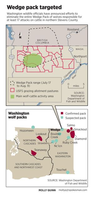 The Wedge Pack, one of about 12 wolf packs in Washington, has been targeted for lethal removal after numerous attacks on cattle in northern Stevens County during the summer of 2012.