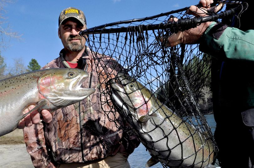Orofino fishing guide Jim McCarthy relishes the moment after netting two Clearwater River steelhead hooked simultaneously by clients while fishing from his boat on Feb. 25, 2015. The Idaho Fish and Game Commission on Friday, Oct. 13, 2017, approved a proposal from the Idaho Department of Fish and Game to open steelhead harvest on the Snake, Salmon, and Little Salmon rivers, plus the Clearwater and its north, south and middle forks. (Rich Landers / The Spokesman-Review)