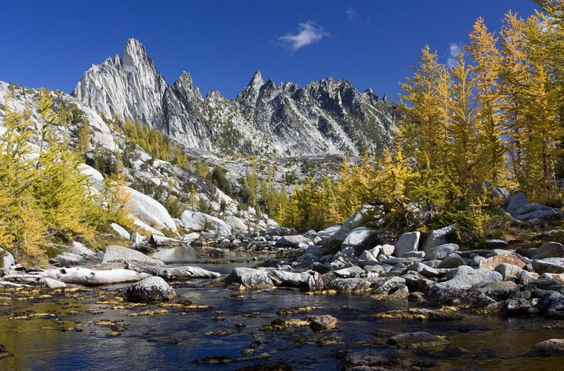Prusik Peak looms above golden alpine larch during early October in the Enchantment Lakes region of the Alpine Lakes Wilderness near Leavenworth, Wash. (Donna Larsen)