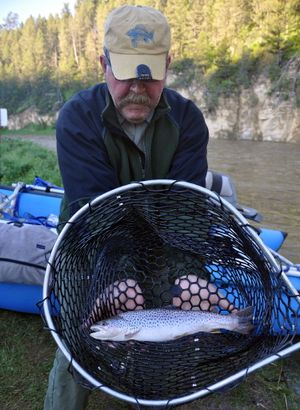 Everette Coulter holds one of the average-size brown trout his group caught during a five-day trip down the Smith River despite high, off-color conditions. (Rich Landers)