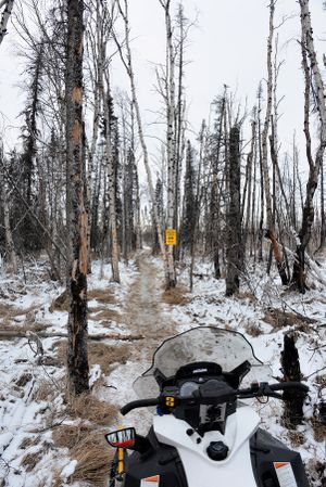 Bob Jones of Kettle Falls pauses to photograph the Iditarod Trail 20 miles south of the Bear Creek Shelter Cabin during his March 2014 snowmobile trek to follow the Alaska sled dog race during a year of skimpy snow conditions.  The trail passes through a burn that scorched the area around 2000 from the Post River Slide for about 30 miles to a point not far south of Bison Camp.  (Robert Jones)